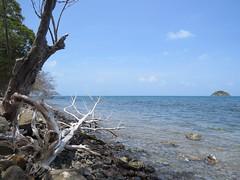 Naturaleza muerta (Providencia, San Andrs y Providencia, Colombia) (Wilson A. Gmez Garcs) Tags: paisajes del de san colombia paisaje andrs caribe providencia sanandrs sanandrsyprovidencia caribecolombiano