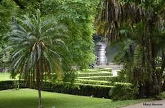 Jardim Botnico de So Paulo (Mara Hermes) Tags: verde green sopaulo natureza sp 2015 jardimbotnicodesopaulo nikond5100