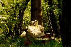 _Crocodile_DSC06792 (Ian Gearing) Tags: park uk trees england west nature woodland arboretum gloucestershire westonbirt trust glos