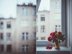 According to movies, rain is the best weather for kisses and confessions of love. (www.juliadavilalampe.com) Tags: vienna wien life flowers love window rain studio austria petals sterreich drops spring lluvia europe rainy romantic regen peonies altbau