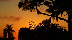 Sunset May 21st. (Jim Mullhaupt) Tags: pictures camera pink blue sunset red wallpaper sky orange sun color tree weather silhouette yellow clouds landscape photography gold evening photo nikon flickr sundown florida dusk snapshot picture palm exotic p900 tropical coolpix bradenton geographic endofday cloudsstormssunsetssunrises nikoncoolpixp900 coolpixp900 nikonp900 jimmullhaupt