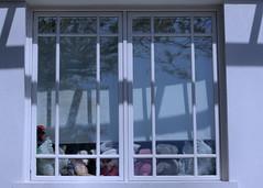 Teddies in Window Two / Les ours en pelouche no. 2 (H - - J) Tags: toronto window outdoor blinds rosedale