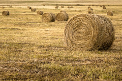Agrupacin  / Group (jeannyre) Tags: agriculture bales