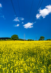 Rapeseed pylon (technodean2000) Tags: uk plant field yellow wales landscape golden nikon buried outdoor south mustard plain rapeseed d610 abergaveny