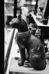 QF4C7721 (leslilundgren) Tags: cat feline pittriversmuseum