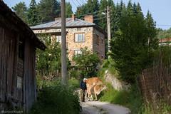 IMG_1231-402 (Martin1104) Tags: fotografie natuur bergen landschap vlinders yagodina snp bulgarije natuurfotografie natuurreis
