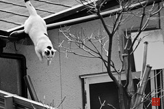 cat () Tags: roof building nature japan fauna cat mammal tokyo blackwhite asia asien natur location getty  sw nippon  katze geography   dach gebude  tier gettyimages tachikawa  tokio einrichtung     sugetier negativefilm schwarzweis  apsc  negativfilm         sonynex7