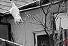 cat・猫 (新男熊) Tags: roof building nature japan fauna cat mammal tokyo blackwhite asia asien natur location getty 日本 sw nippon 東京 katze geography 猫 自然 dach gebäude 動物 tier gettyimages tachikawa 立川 tokio einrichtung ビル 白黒 アジア 地理 säugetier negativefilm schwarzweis 屋根 apsc ネガ negativfilm 亜細亜 所 施設 場所 哺乳動物 ゲッティ イメージズ 陰画 sonynex7