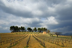 ochre in Luberon, near Roussillon (pierre hanquin) Tags: trees light sky cloud france color colour tree green nature colors field yellow clouds landscape geotagged rouge spring nikon europa europe colours cloudy couleurs champs vert clear ciel arbres vineyards fields provence grn nuage nuages paysage landschaft vignes arbre printemps couleur 1685 lubron 1685mm d7000 1685mmf3556gvr magicunicornverybest mygearandme mygearandmepremium mygearandmebronze mygearandmesilver mygearandmegold mygearandmeplatinum hanquin