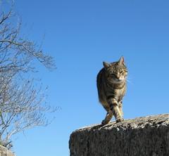 entrechat (b.four) Tags: cat chat gatto alpesmaritimes coth rubyphotographer bairols mygearandme ruby10 ruby15