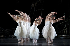 Swan Lake: An Essential Guide