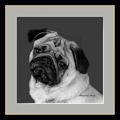 Oreo, Versin B&N, Enmarcado/Oreo, Versin B&W, Framed (Altagracia Aristy) Tags: blackandwhite blancoynegro puppy amrica dominicanrepublic perro tropic caribbean doggy perrito antilles laromana caribe carabes repblicadominicana trpico antillas quisqueya altagraciaaristy fujifilmfinepixhs10 fujihs10 fujifinepixhs10 carabi
