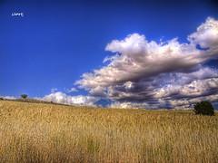 Tarde de verano II (llortj) Tags: naturaleza paisaje campo dblringexcellence tplringexcellence