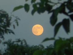 Moonrise (Viktor Cseh) Tags: moon hungary este hold horizont hungarian nagyvarsny