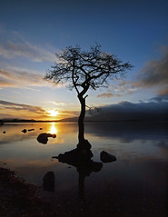 Lone Tree 2 adj2 (Iain T Macdonald) Tags: sunset lochlomond lonetree millarochybay
