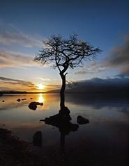Lone Tree 2 adj2 (Iain T Macdonald) Tags: sunset lochlomond lonetree millarochybay