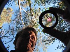 A focussed flower - explored (LSydney) Tags: trees selfportrait flower lens photographer lauriewilson