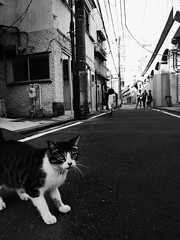Untitled (yoshiju) Tags: yokohama koganecho grd2