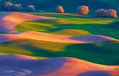 The colors of the land (Yan L Photography) Tags: shadow texture colors field lines landscape lights washington spokane butte northwest wheat shapes land fields colfax wheatfields palouse steptoe