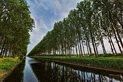 gray day in Damme #3 (expatwelsh) Tags: trees summer sky reflection canon reeds canal bomen belgium belgique belgie zomer riet muddy 1635 damme modderig cs5 topazadjust topazdenoise canoneos5dmarkiii 5dmkiii dammsevaart