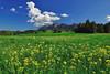 Prats verds vers Montserrat (Sergi Boixader) Tags: camp primavera sol cel montserrat catalunya sergi muntanya 2012 verd llum bosc bages flors núvols maig tarda plana herba blat verdor claror pladebages conreu massísdemontserrat serraladaprelitoral catalunyacentral boixader sergiboixader depressiócentral