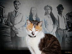 Na frente da TV (J G Maia) Tags: brasil canon eos rebel tv foto flash fotos gata felino fotografia niteroi xsi jgm 450d jgmaia canonefs18200mmf3556is canon450deosrebelxsi chimiguinha