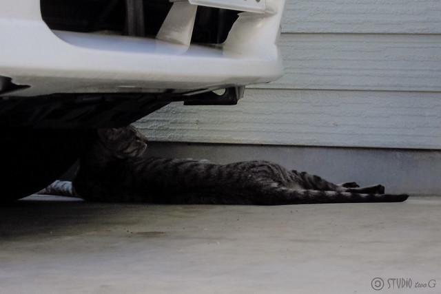 Today's Cat@2012-08-17