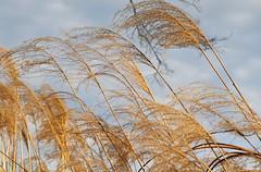 IMG_6959 (sandy richard) Tags: gardens longisland plantingfields plantingfieldsarboretum sandyrichard sandrarichard