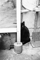 (Mitsudomoe) Tags: street blackandwhite bw film animal japan