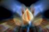 naturaleza onírica (Opera.Pink - d s g n) Tags: naturaleza flower color macro canon flor marzo cala 2014 surealismo marveiga jugandoconlaslucesyobjetivo