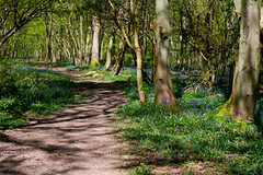 A New Spring (KT Photography.) Tags: wood trees england bluebells woodland kent spring southeast 2014