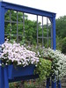 Clever idea, Montreal Botanical Gardens (ethelred30) Tags: window fun vines box creative monochromatic container petunia alyssum snowprincess