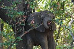 Suedafrika-32 (Lukas P Schmidt) Tags: elephant nationalpark krugerpark