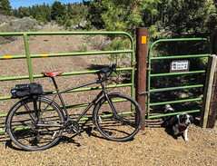 Specialized AWOL and Cow Dog Going Under a Gate (ex_magician) Tags: pictures dog oregon photo image photos joey picture adobe bordercollie newdog oce railstotrails lightroom railtrail moik ultrarunning klamathfalls trailrun traildog spragueriver adobelightroom klamathcounty trailbuddy olene ocetrail railbanking oregoncaliforniaandeastern ruralklamathcounty ocewoodslinestatetrail switchbackmountain