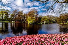 Keukenhof garden........... (Rambonp love's all creatures of Universe.) Tags: pink flowers blue trees red wallpaper holland green water yellow clouds canon landscape europe paradise tulips country keukenhof keukenhofgarden