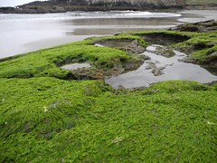 2016-04-27_DSCN5295 (becklectic) Tags: beach oregon oregoncoast tidepools sealrock 2016