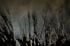 Contraluz evaporacin (Chris Momberg) Tags: chile light naturaleza art alex nature arte fineart christopher siluet backlighting fotografo chileno natgeo pumarino momberg chmomberg