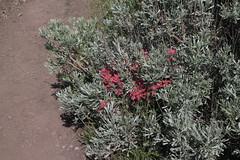 IMG_7358 (yellowstonehiker) Tags: antelopeisland dayhike dayhikes frarypeak frarypeakmay142016dayhike