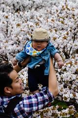 Father and son (p.fabian) Tags: baby japan father jp  sakura padre vater japn    kytoshi kytofu japn