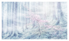Scotland foggy forest (twistednoodle) Tags: pink trees texture forest photoshop scotland fineart foggy atmosphere overlay fantasy pastels 2016 kathsalier sonya7r