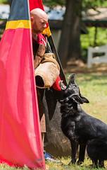 2016-05-22, IPO Training-30 (Falon167) Tags: dog shepherd josh german miles gsd germanshepherddog