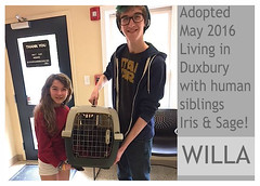 Willa-adopted (Ali Crehan) Tags: cat may shelter adopted 2016