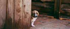 _MG_6081 (sheltersirius) Tags: dogs adopt shelter sirius ukraine puppy cute dog canine adoptable breed outdoor
