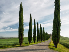 Walk up to... cypress avenue (Karsten Gieselmann) Tags: travel italien blue trees sun white color tree green nature weather clouds landscape spring europa seasons jahreszeiten natur lawn meadow wolken olympus tuscany grn blau valdorcia landschaft sonne farbe bume baum wetter reise frhling toskana weis zypresse m43 mft cipresse microfourthirds agriturismopoggiocovili mzuiko feldweidewiese 1240mmf28 em5markii kgiesel