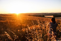 Sunset over field (plane-spotter31) Tags: flowers sunset sky woman sun flower love nature beautiful field sunshine silhouette sunrise canon wonderful hair landscape photography twilight women photographie view live gorgeous awesome details country moment capture