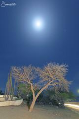 Moon lit tree (elginz) Tags: night moon tree aruba light painting sero colorado nightphotography stars mars sagittarius scorpio constellation canoneos6d dxopro sagittariusteapot landscape bluesky blue cactus lighttrail scorpius