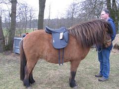 Vidalin with his new saddle (Steven M Schultz) Tags: vidalin