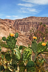 Boquillas Canyon w/Prickly Pear