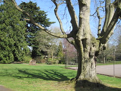 Back to the beginning of the month IMG_5581 (tomylees) Tags: shadow tree public gardens april essex 2012 tenniscourt braintree bocking