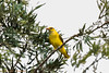 IMG_6847L4 (Sharad Medhavi) Tags: bird canonef100400mmf4556lisusm canoneod50d birdsandbeesoflakeshorehomes